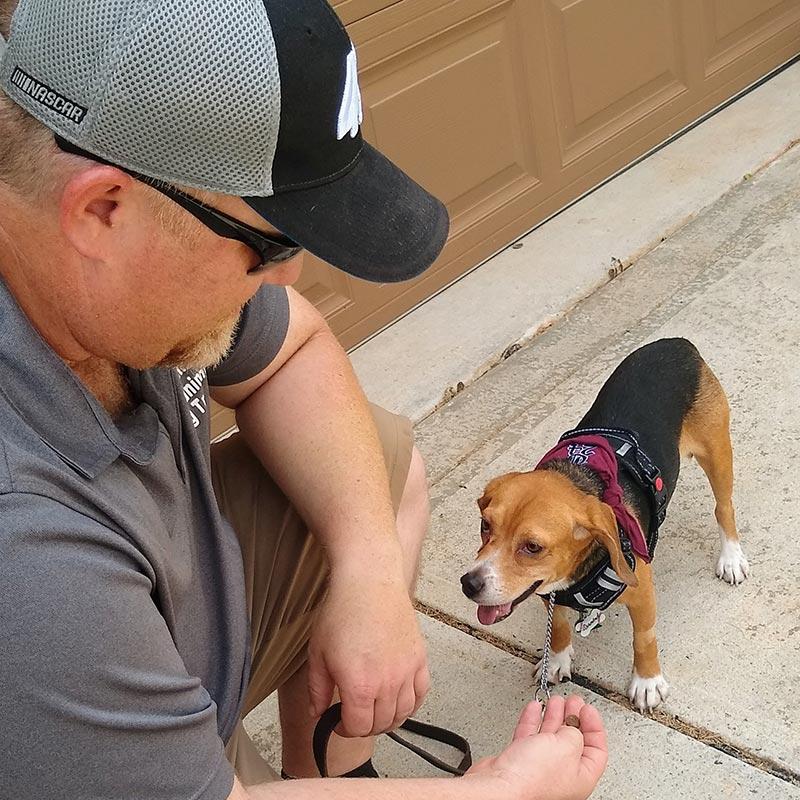Carolina's Dog Trainer | Lancaster, SC | working with diamond the beagle