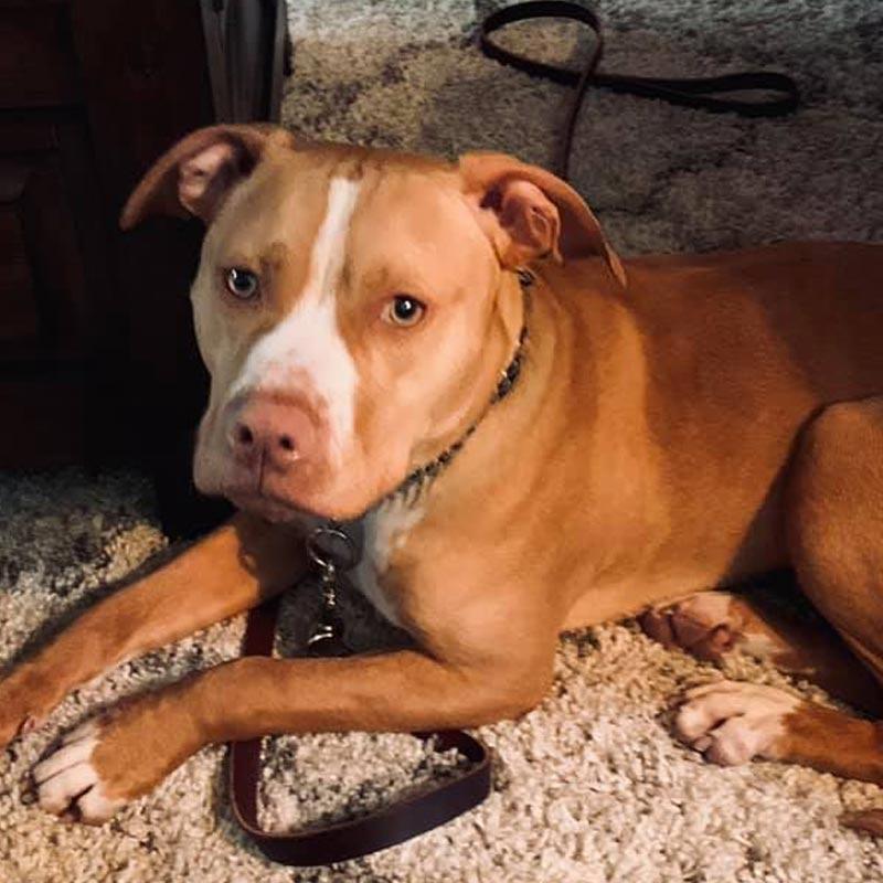 Carolina's Dog Trainer | Lancaster, SC | cooper after training