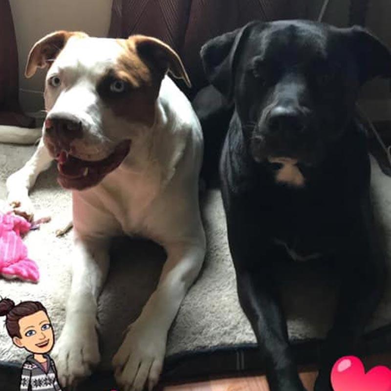 Carolina's Dog Trainer | Lancaster, SC | oreo and chunky monkey well trained dogs
