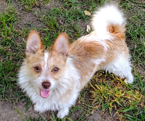 Carolina's Dog Trainer | Lancaster, SC | dog in training